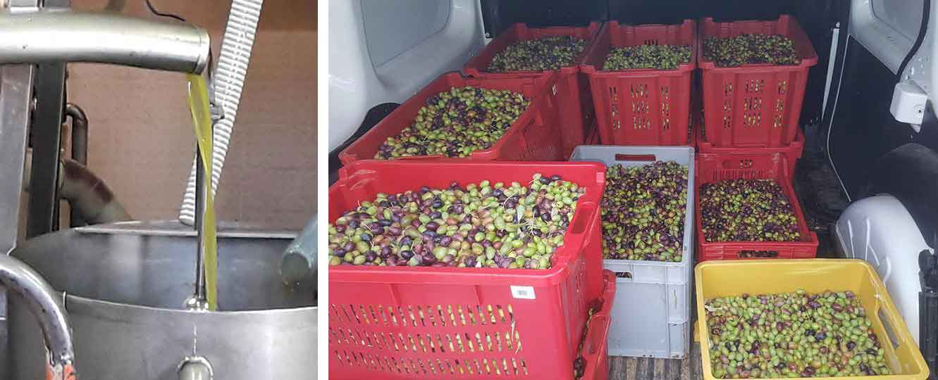 production olives